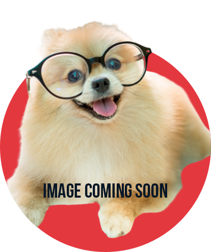 Default headshot - Image Coming Soon (Pomeranian with Glasses)